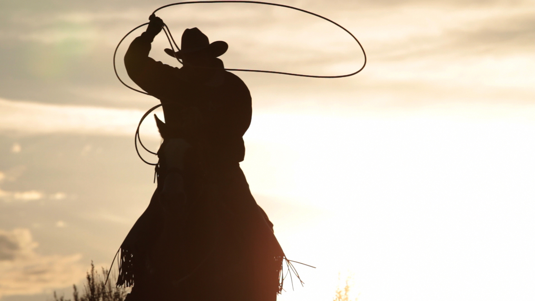 Silhouette of cowboy on horse swinging lariat